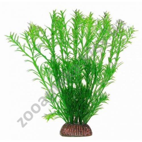Aquatic Nature - аквариумное растение Акватик Натюр
