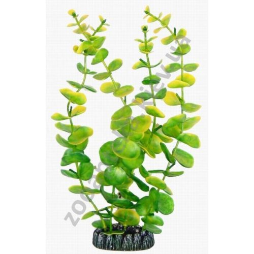 Aquatic Nature - аквариумное растение Акватик Натюр, 29 см х 6 шт/уп