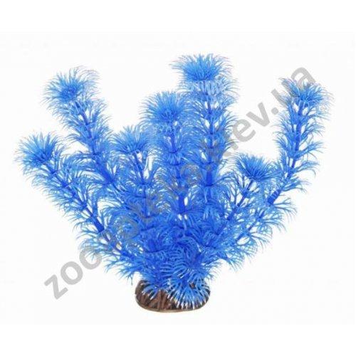 Aquatic Nature - аквариумное растение Акватик Натюр, синего цвета