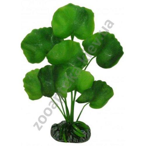 Aquatic Nature - аквариумное растение Акватик Натюр, зеленого цвета