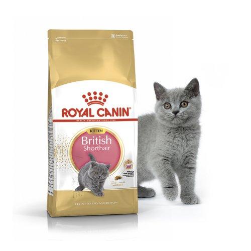 Royal Canin British Shorthair Kitten - корм Роял Канин для котят британских короткошерстных