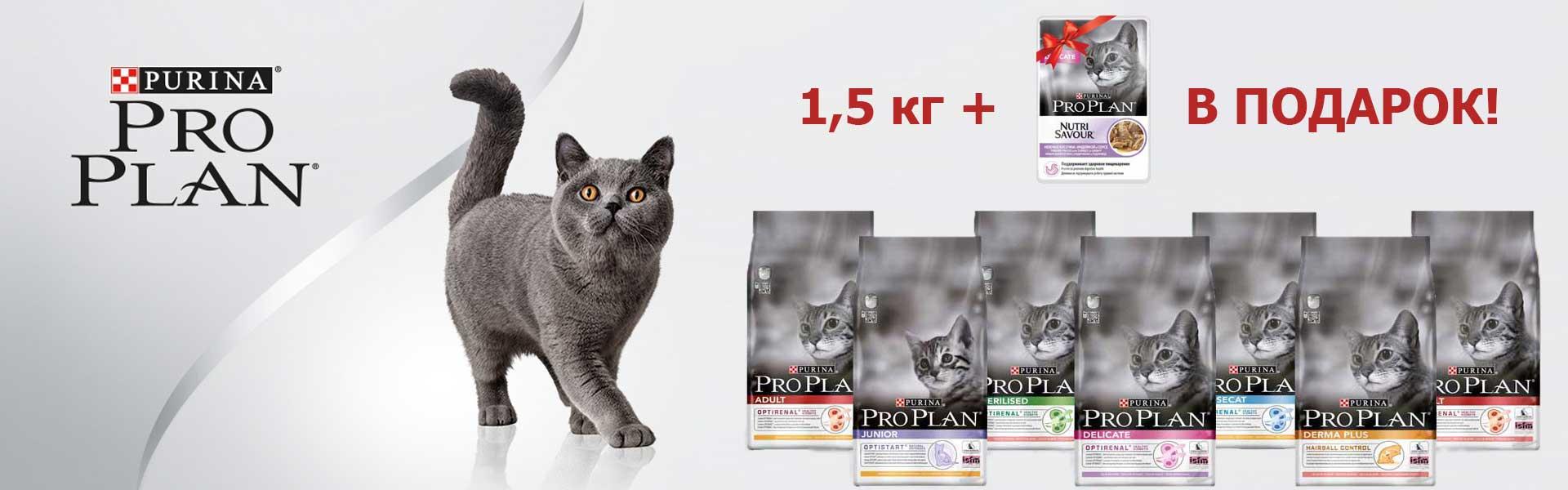 Pto Plan для кошек