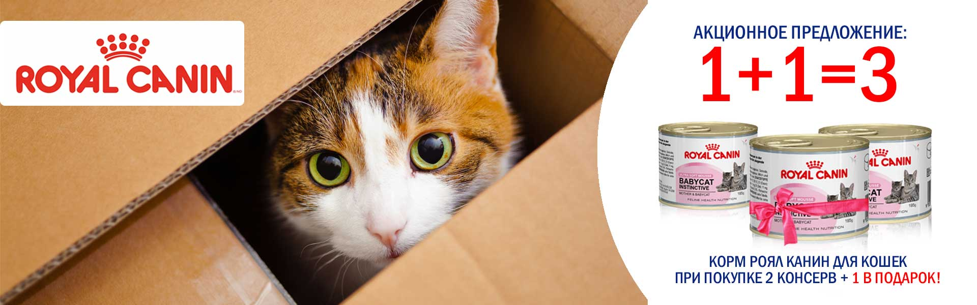 Роял кошки
