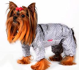 Одежда для собак - зоотовары Рыжий Кот 1f2b75b76243f