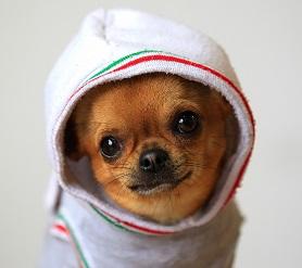 Одежда для собак - зоотовары Рыжий Кот c564feb766ca8