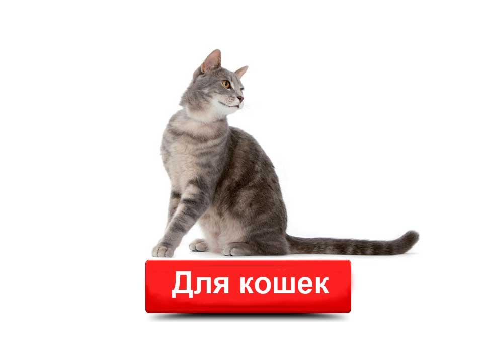 Сухие корма Роял Канин для кошек