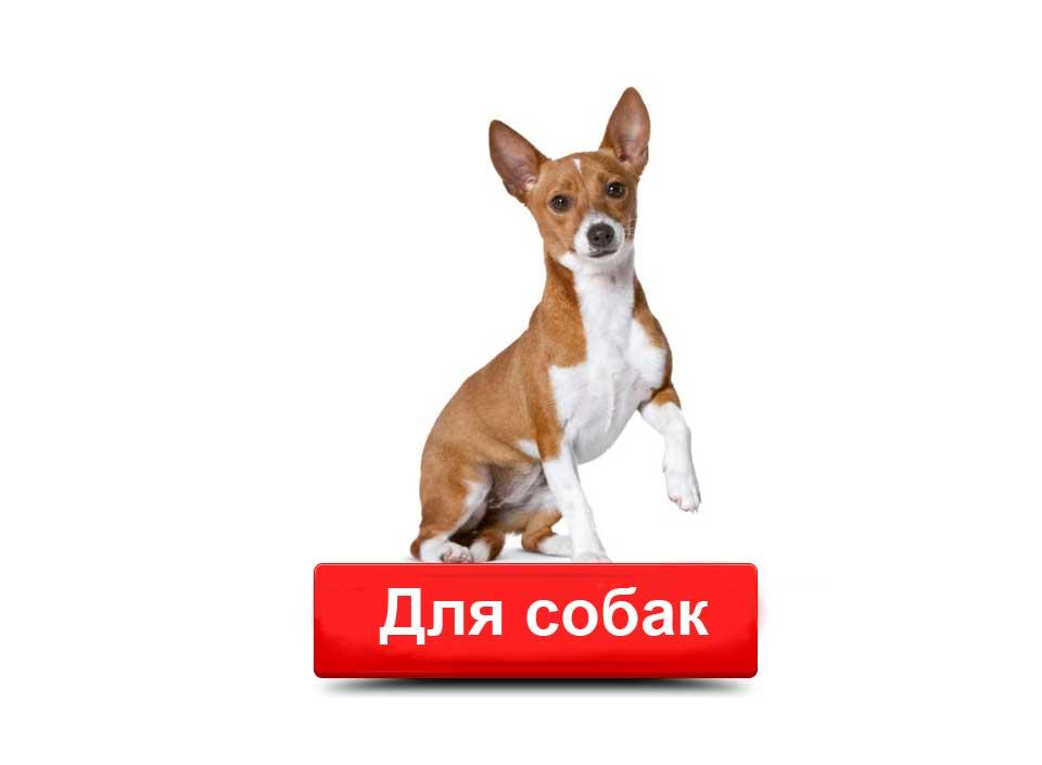 Сухие корма Роял Канин для собак