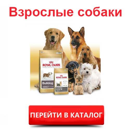 Корм Роял Канин для взрослых собак