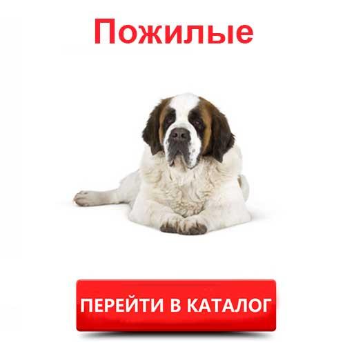 Корм Роял Канин для пожилых собак