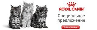 Royal Canin 8+4