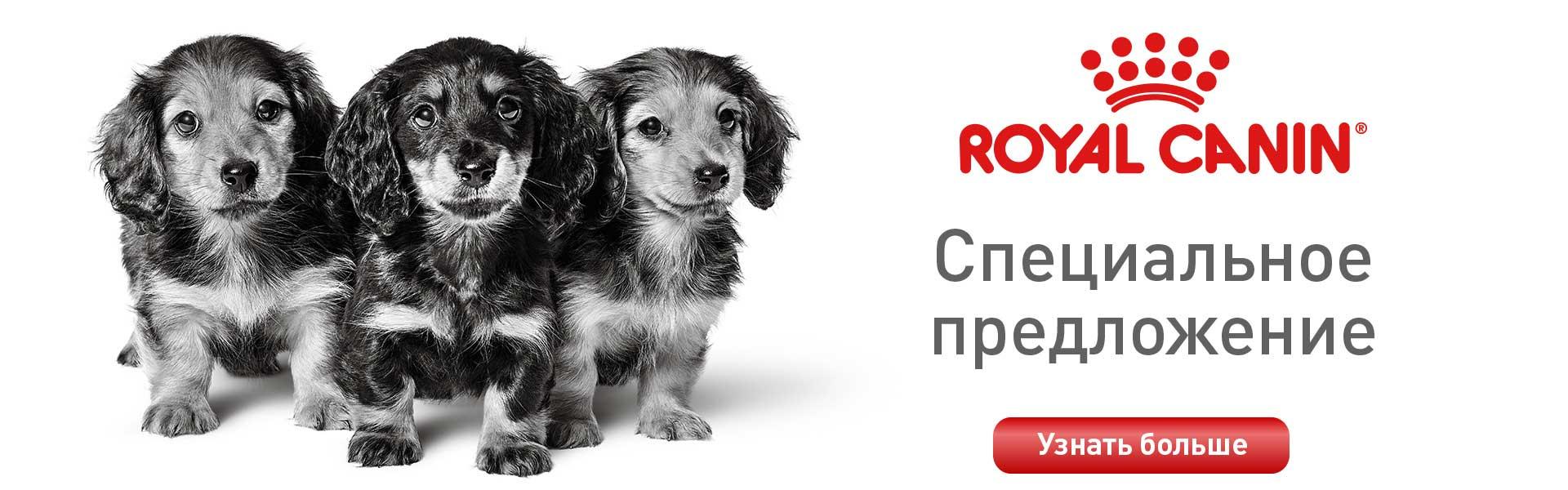 Акция для щенков