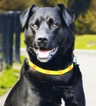 Pet Pro - ошейник Пет Про с огоньками для собак  (0749620)