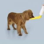 Savic Aqua Boy - походная поилка Савик для собак (0267, 0269)