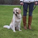 Trixie - учебная петля Трикси для дрессировки собак