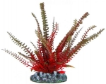 Aquatic Nature - аквариумное растение Акватик Натюр, 13 см х 10 шт/уп
