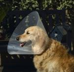 Pet Pro - воротник елезаветинский Пет Про для собак (0796001)