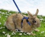 Pet Pro - шлея для кролика Пет Про с поводком нейлон