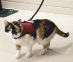 Pet Pro Komfort - шлея с поводком и колокольчиком Пет Про Комфорт для кошек (0730284)