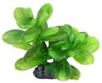 Aquatic Nature - Аквариумное растение Акватик Натюр, 13 см х 8 шт/уп